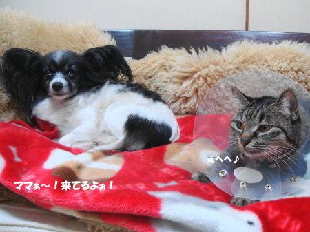 頑張って、お姉ちゃんとも仲良くするの!by桃