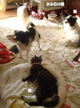 朝の犬部屋