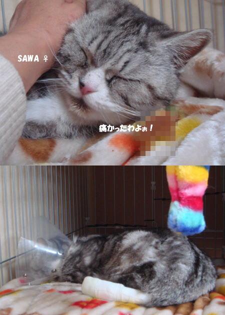 SAWAちゃん