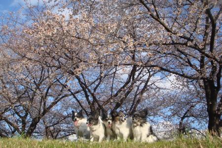 お花見しながら散歩です♪