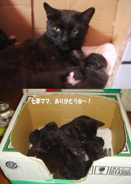 7匹の母になった!七夢ママ