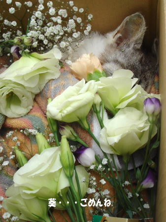 葵、お別れのとき・・・
