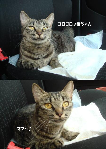 ママ、どこ行くの?