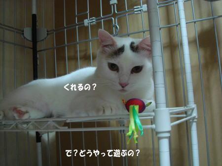 これが・・・何か?by蓮
