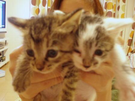 子猫たち 023