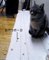 b0059053_040958.jpg