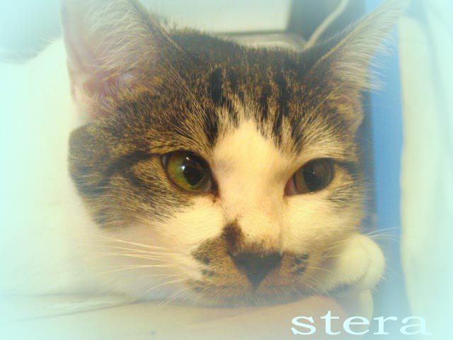 stera-2.jpg