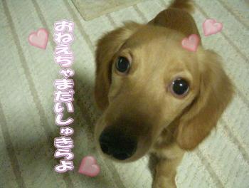 daisuki6image7.jpg