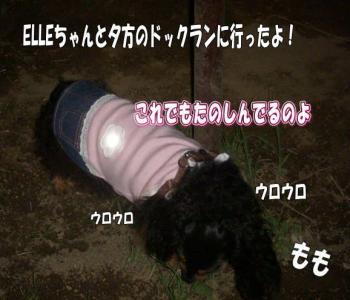 dokkuimage_convert_20080812224622.jpg