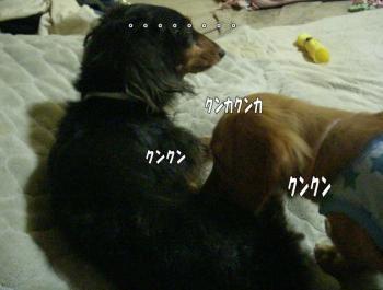 furo3image3.jpg