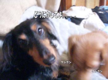 furo5image4.jpg