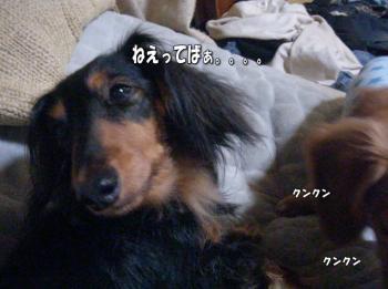 furo6image5.jpg