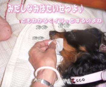 hamigaki2image10.jpg