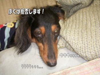 hamigaki3image11.jpg