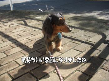 kimoimage5.jpg