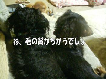mimi4image3.jpg