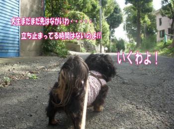 san1image1.jpg