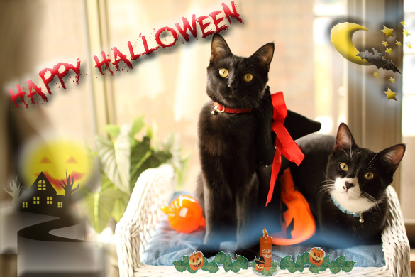 Halloween-0.jpg