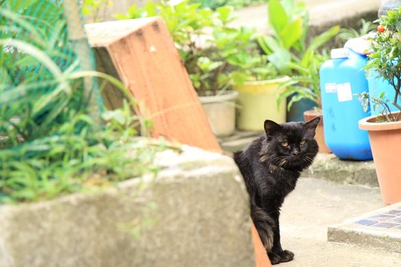 ainoshima2-17.jpg