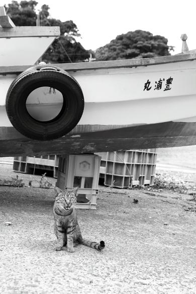 ainoshima2-20.jpg