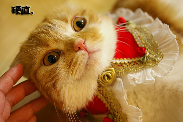 お洒落猫。