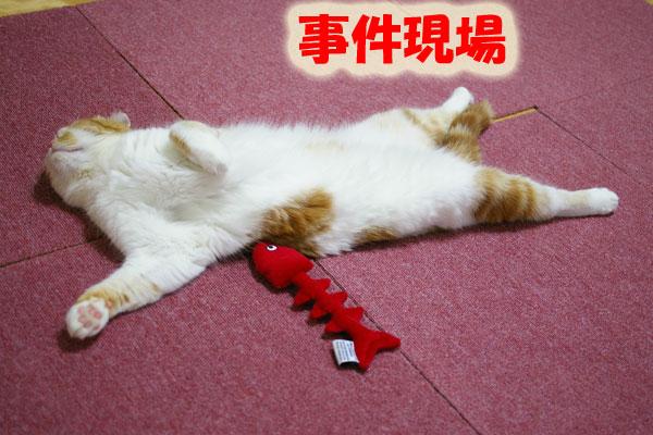 殺猫事件。