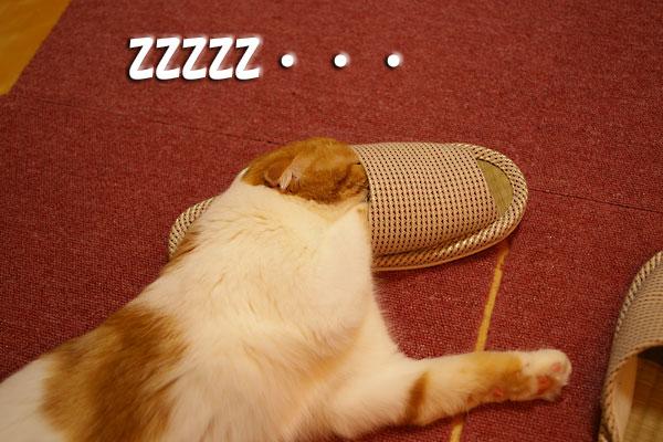 眠・・・。