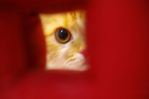 赤い覗き穴。