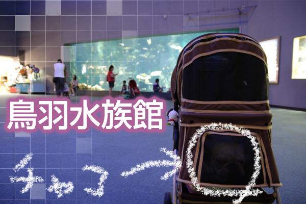 20080813_01.jpg