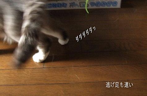 20080515-8.jpg