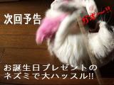 20080515-yokoku.jpg