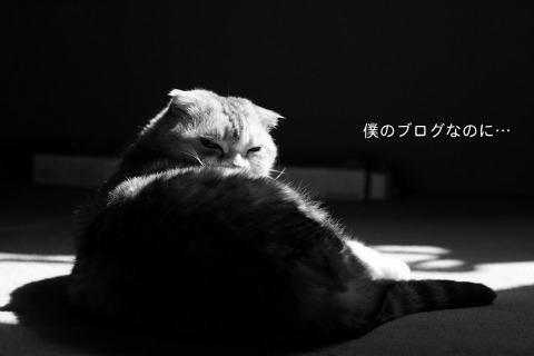 IMG_341.jpg
