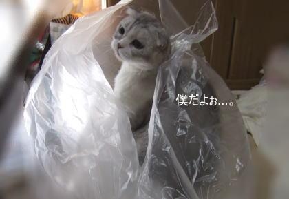 chai200610-51.jpg