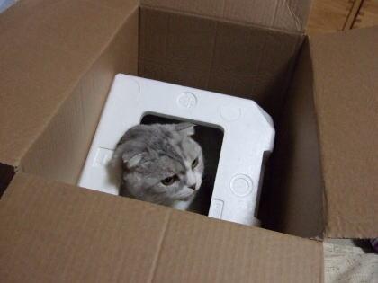 chai200611-1.jpg