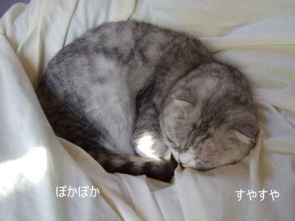 chai200611-8.jpg