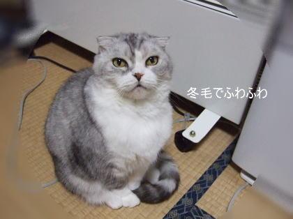 chai200612-2.jpg