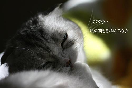 chai200703-22.jpg