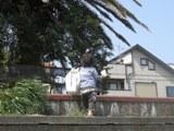 20100320三浦海岸 (61)