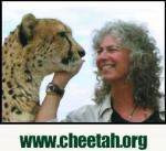 cheetahorg
