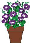 紫紫陽花完