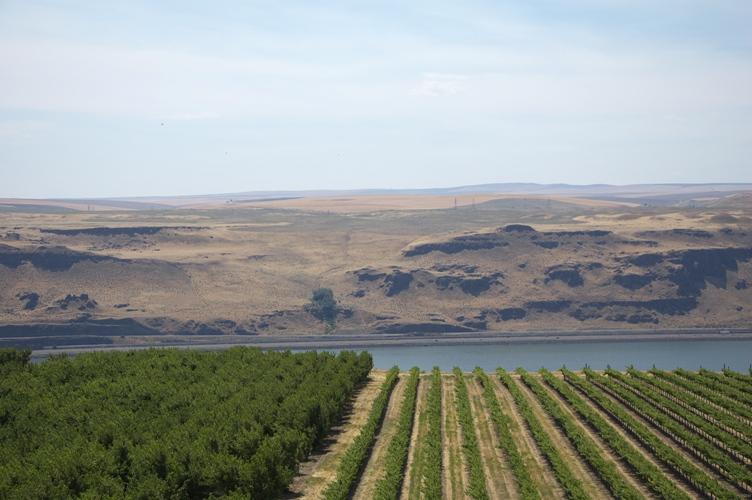 Maryhill Winery 1