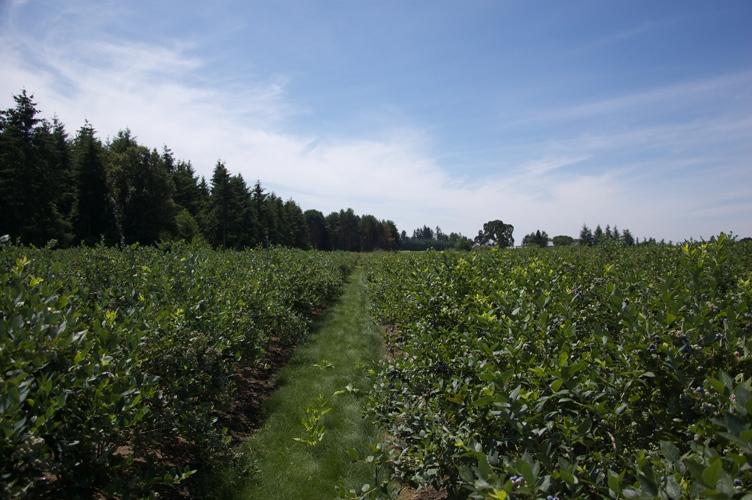 Morning Shade farm 2