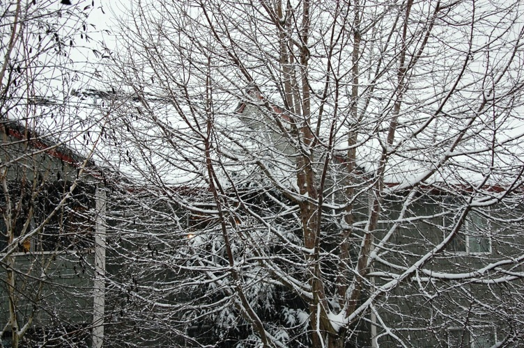 自宅から雪1