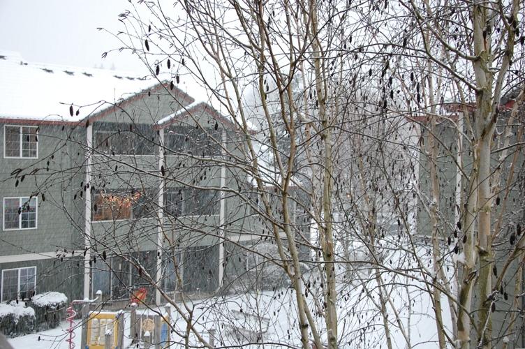 自宅から雪2