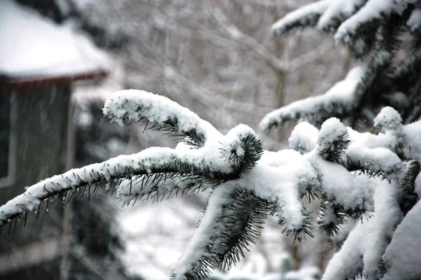 自宅から雪3