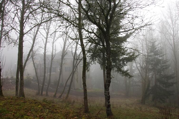 霧っぽい感じ2