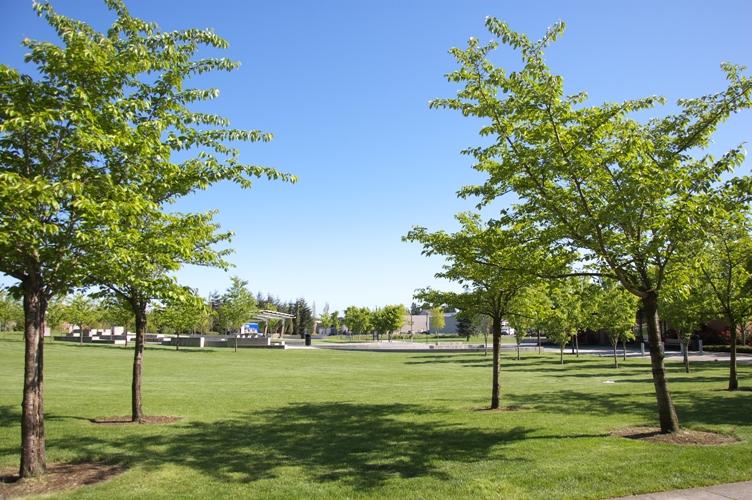Wilsonville Town Center Park3