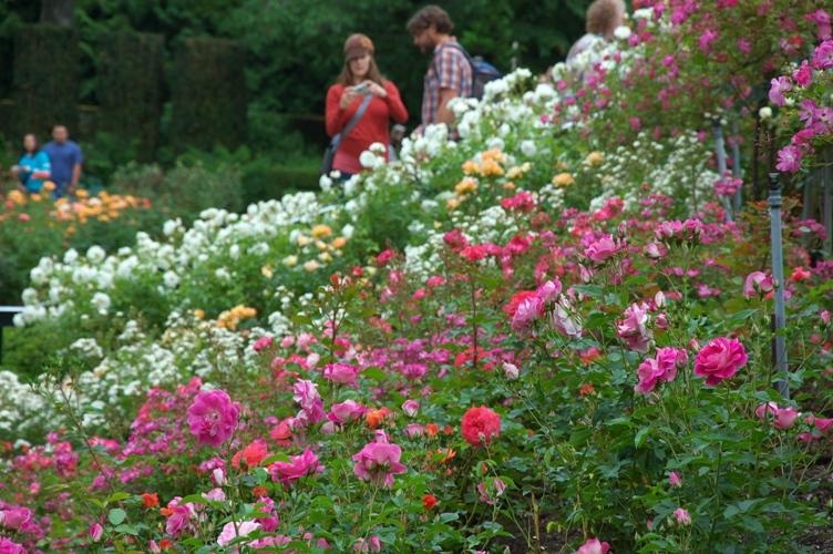 薔薇と栗鼠 2009 1