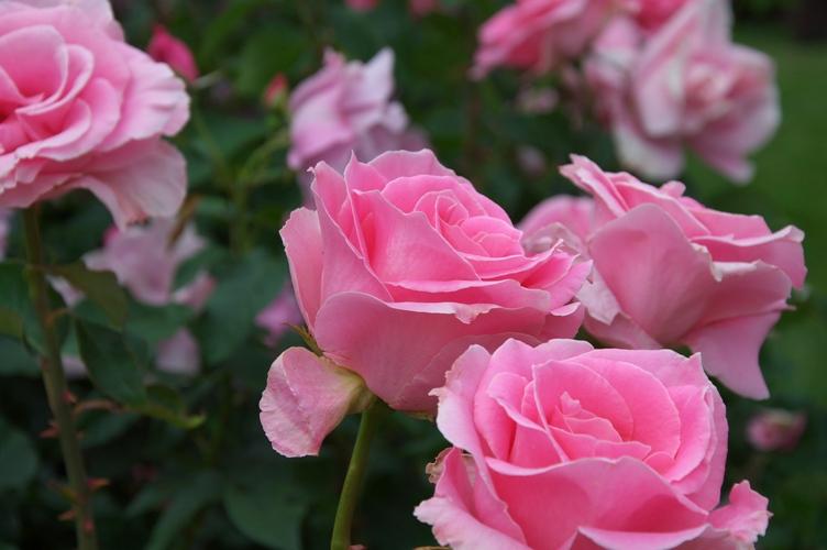 薔薇と栗鼠 2009 6