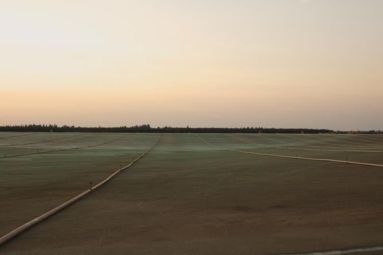 夕焼け農場 2